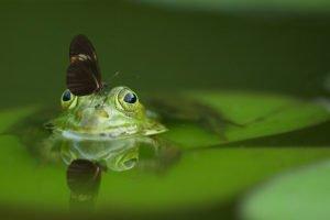 Frosch und Schmetterling