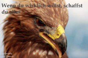 Adler- wenn du wirklich willst, schaffst du alles