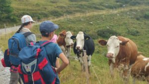 Kühe auf dem Weg zur Malga Antola