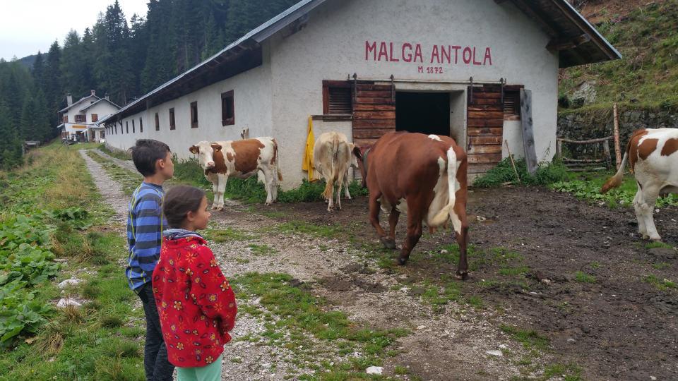 Malga Antola Kuhstall