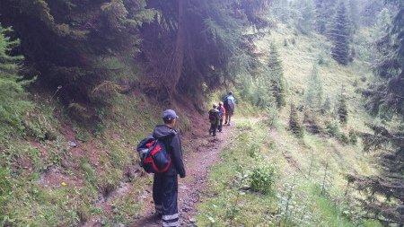 Bei Regen durch den Wald zur Malga Antola