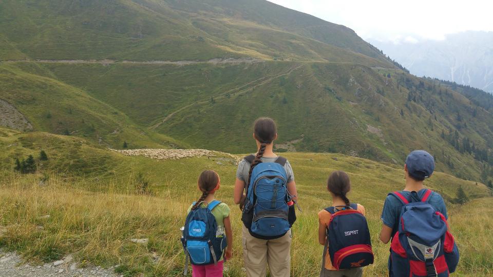 Schafe auf dem Weg zur Malga Antola