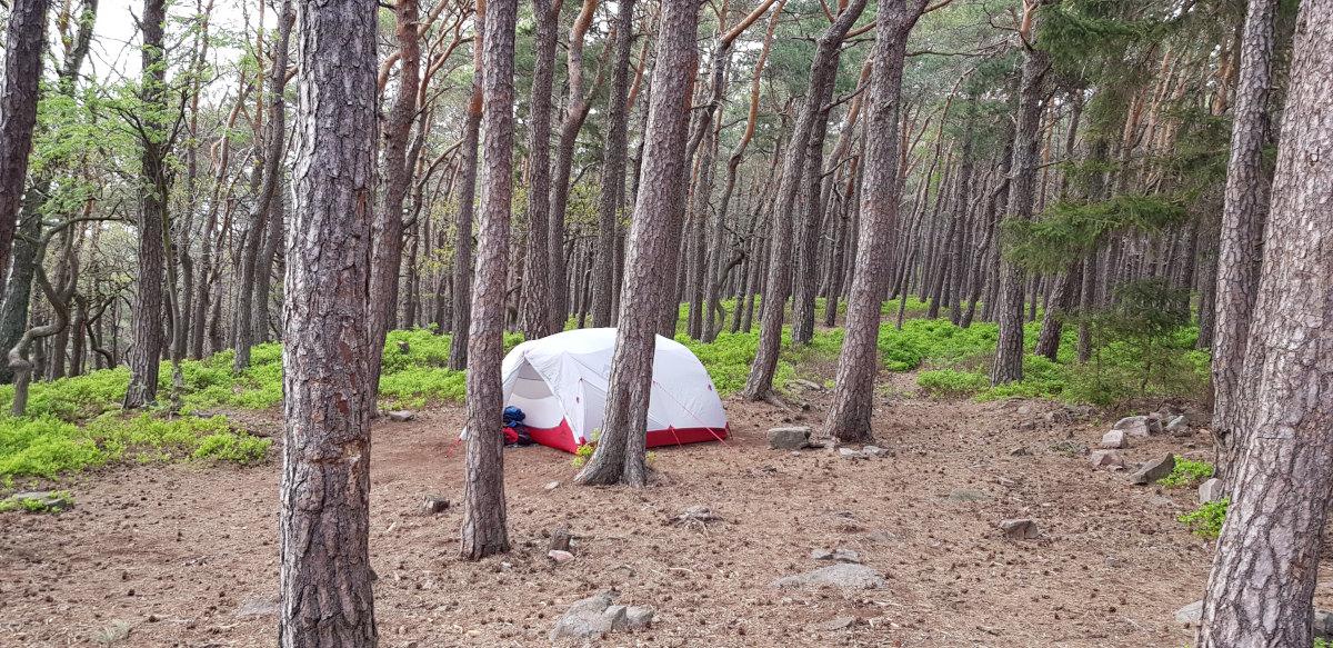 Unser Zelt unter Kiefern im Heidelbeerwald