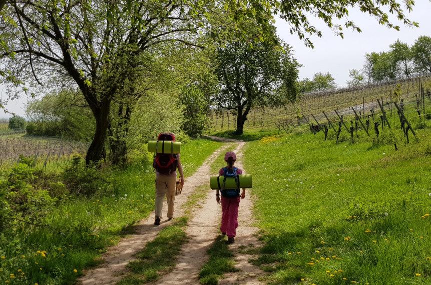 Aus dem Wald hinaus zwischen Weinstöcken und Wiesen
