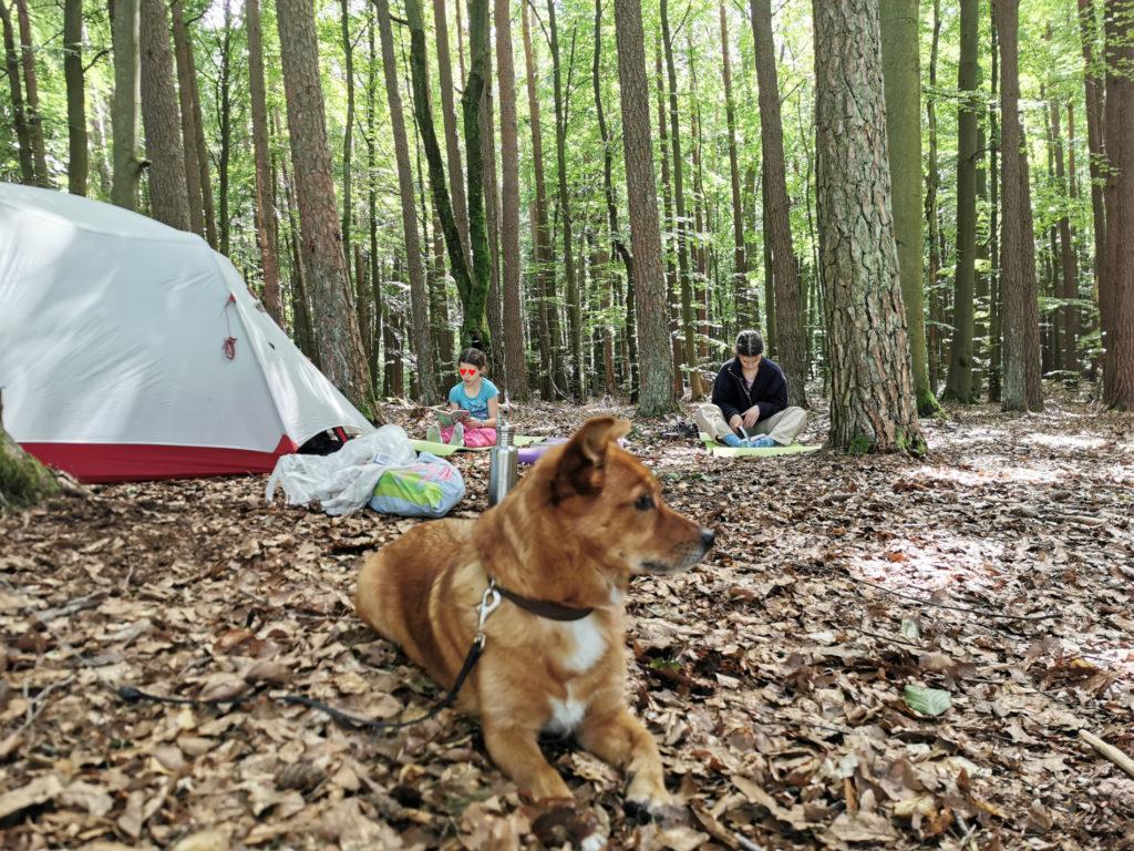 Zeltplatz unter Bäumen