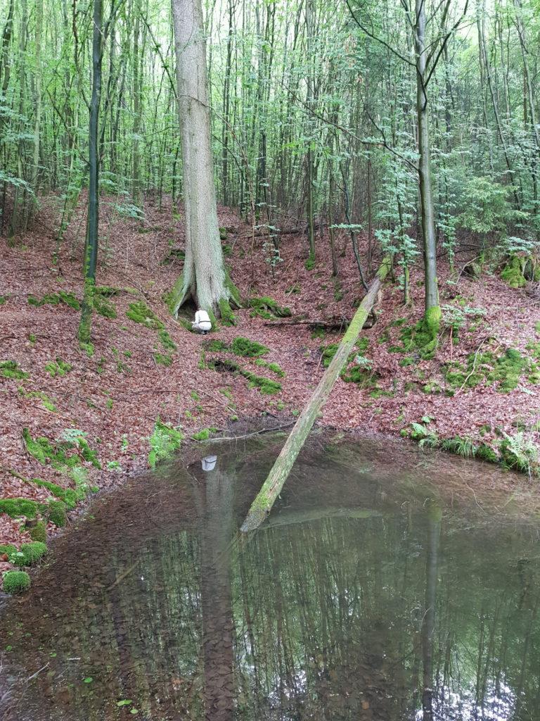 Biebsbrunnen Quelle