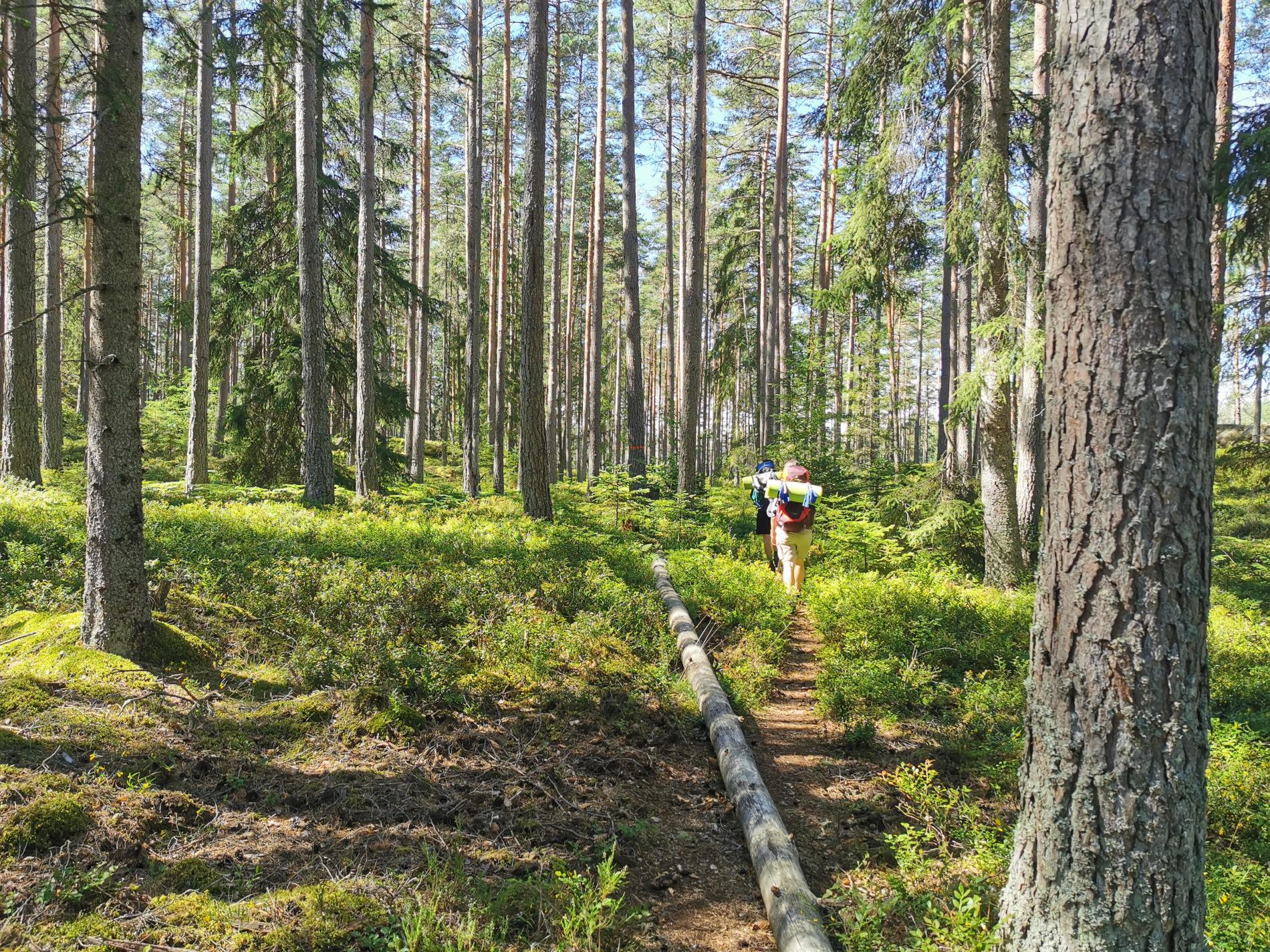 Wald im Sörmlandsleden