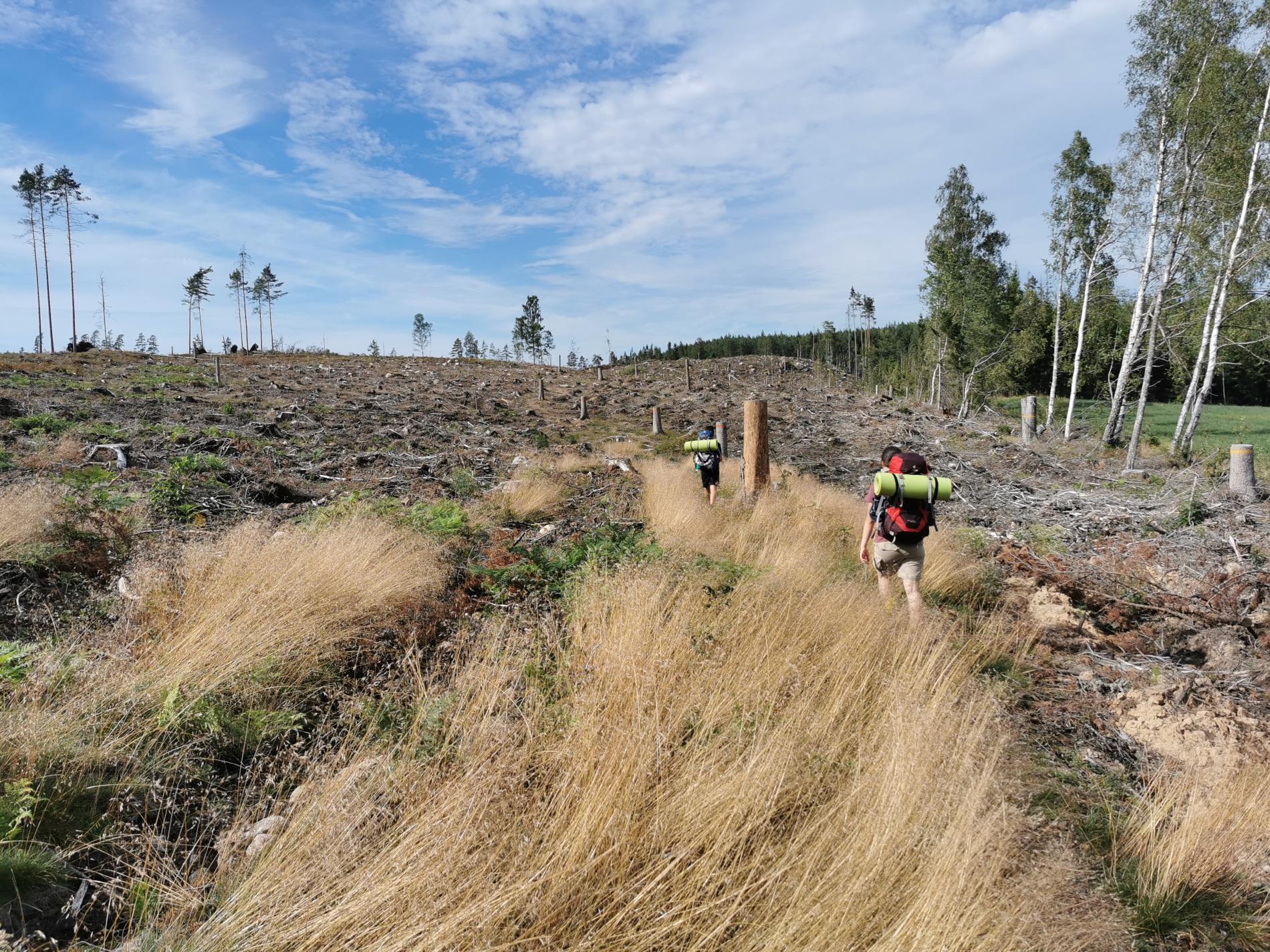 abgeholztes Gebiet auf dem Sörmlandsleden